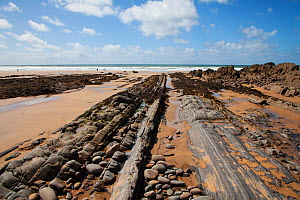 Wave-cut platform on beach. Folded sandstone and shale beds of Bude Formation. Bude, Cornwall, England, UK. August 2018.  -  Mike Read