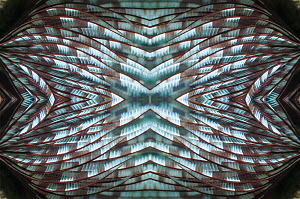 Kaleidoscopic image of Featherduster worm. Indonesia.  -  Georgette Douwma