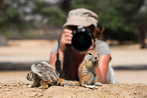 Photographer Ann Toon photographing Cape ground squirrels (Xerus inauris) Kgalagadi Transfrontier Park, South Africa, January 2016. Model released.  -  Ann  & Steve Toon