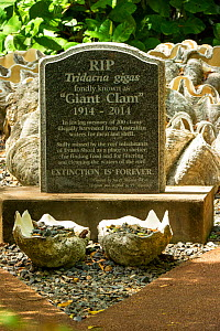 Tombstone for 200 Giant clams (Tridacna gigas) illegally harvested in and around Evans Shoal, Darwin. Northern Territory, Australia. 2017.  -  Steven David Miller