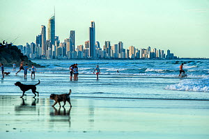 People and dogs on Tallebudgera Beach. Skyline of Surfers Paradise in background, Gold Coast, Queensland, Australia. 2016. - Steven David Miller