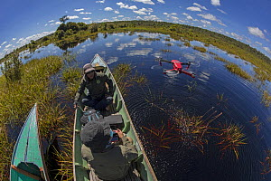 Field staff (from the Centre for International Cooperation for Management of Tropical Peatland (CIMTROP)  and the Borneo Nature Foundation) on the Sabangau River using a drone for an illegal logging a...  -  Duncan Murrell