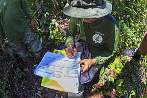 Member of the field staff of the Centre for International Cooperation for Management of Tropical Peatland (CIMTROP) recording data on an illegal logging and poaching patrol in the Sabangau (peat-swamp...  -  Duncan Murrell