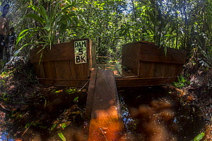 One of the dams constructed by the local field staff of the Borneo Nature Foundation in the canals in the Sabangau (peat-swamp) Forest. These are made to combat forest fires. Central Kalimantan, Indon...  -  Duncan Murrell