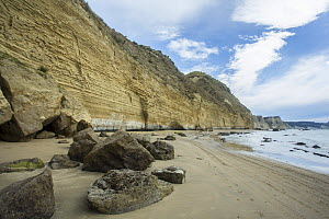 Stratified cliffs of sandstone, river gravel, pumice and silt, originally deposited between 300,000 to 1 million years ago at Cape Kidnappers, Hawke's Bay, North Island, New Zealand.  -  Duncan Murrell