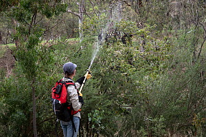 Volunteer wildlife career (Olwyn Jones) uses water to try and cool down some Grey-headed Flying-foxes (Pteropus poliocephalus) at the Melbourne flying-fox colony during a heat stress event day. Yarra... - Doug Gimesy
