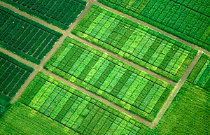 Aerial view of Cereal crop variety trials plots to test differences between varieties such as yield and disease resistance. - Nigel Cattlin