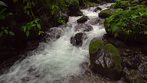 Slow motion shot of a mountain stream running through pristine montane rainforest, Carchi Province, Ecuador, 2017.  -  Morley Read