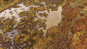 Aerial tracking shot of a high-altitude bog (4,000m), such bogs generate peat over time, thus capturing carbon dioxide from the atmosphere, near Papallacta, Ecuadorian Andes, 2018. - Morley Read