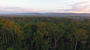 Aerial shot ascending over rainforest canopy at dawn, with the Rio Napo in background, a tributary of the Amazon, Napo Province, Ecuador, 2017. - Morley Read