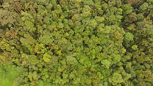 Aerial tracking shot looking over rainforest canopy, Amazonian slopes of the Andes, Morona Santiago Province, Ecuador, 2018.  -  Morley Read