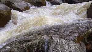 Slow motion clip of the Rio Abanico cascading over boulders, Amazonian slopes of the Andes, Morona Santiago Province, Ecuador. - Morley Read