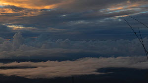Clouds forming above the Amazon rainforest at dawn, viewed from Sumaco Volcano, Orellana Province, Ecuador, 2018. - Morley Read