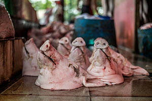 Pig heads before being sold at the market. Thailand. February 2019.  -  Jo-Anne McArthur / We Animals