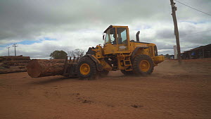 Loader transporting trees cut from the Amazon rainforest around a logging camp, Amazon, Brazil, June. - Laurie Hedges