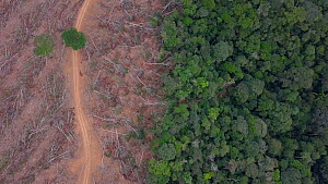 Drone shot rising over a recently logged area of the Amazon rainforest, showing deforestation, Brazil, 2019. - Laurie Hedges