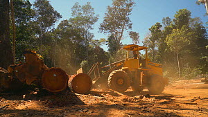 Loader stacking trees cut from the Amazon rainforest in a logging camp, Rondonia, Brazil, 2019. - Laurie Hedges