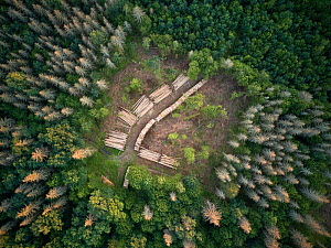 Aerial view of clearing with felled logs in Bialowieza Forest UNESCO World Heritage Site, Poland. Highly commended in the Wildlife Photojournalism Category of the Wildlife Photographer of the Year Awa...  -  Joris  van Alphen