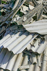 White asbestos dumped in a garden contravening local authority guidelines about safe removal.  -  David  Woodfall