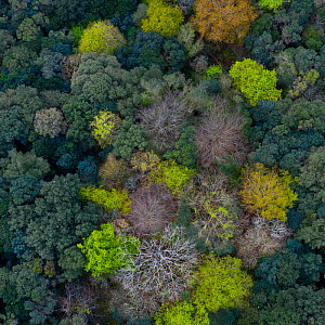 Mediterranean forest dominated by evergreen Holm oak (Quercus ilex), with deciduous trees coming into leaf in spring. Liendo Valley, Montana Oriental Costera, Cantabria, Spain. April 2019. - Juan Carlos Munoz