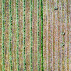 Haymaking, aerial view. Hay bales in one field, rows of recently cut grass in other. La Gandara, Soba Valley, Valles Pasiegos, Cantabria, Spain. May 2019.  -  Juan Carlos Munoz
