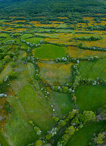 Countryside with patchwork of small fields bordered by hedgerows, woodland in distancem, aerial view. Merindad de Montija, Burgos, Castile and Leon, Spain. May 2019.  -  Juan Carlos Munoz