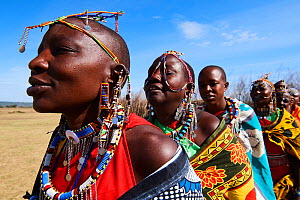 Group of Maasai women singing and dancing in traditional dress and adorned with bead work, Masai Mara National Reserve, Kenya. - Eric Baccega