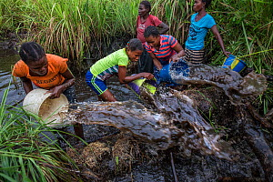 Women of Mpelu village practising agroforestry. Here they build makeshift dams out of mud, then sequester the fish, bucket out the water through nets and catch the fish. Democratic Republic of the Con...  -  Karine Aigner