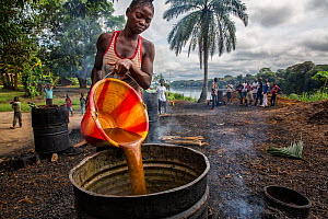 Woman pouring palm oil into a barrel to simmer down. This is truly sustainable palm oil production. The production is done on a very small scale, within a local community. People come and buy in small...  -  Karine Aigner
