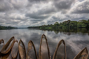 Traditional canoes, or pirogues, in the Lukenie River  Democratic Republic of the Congo.  -  Karine Aigner