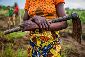 Sala Ozwa, a women's association, holds an axe which she uses to cultivate a shared field in the village of Mbanzi. Democratic Republic of Congo. May 2017.  -  Karine Aigner