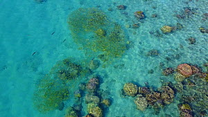 Tracking shot over coral reef, Ilot Maitre, New Caledonia, 2017.  -  Fred  Olivier
