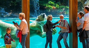 Visitors taking selfies with smartphones with Polar bear (Ursus maritimus) swimming in background. Zoo de la Fleche, Sarthe, Pays de la Loire, France. 2019  -  Philippe Clement