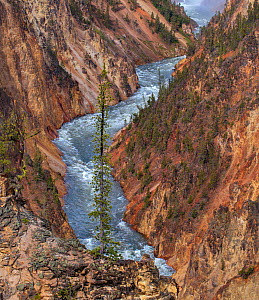 Yellowstone River flowing through Grand Canyon of Yellowstone, Yellowstone National Park, Wyoming, USA. June 2018.  -  George  Sanker