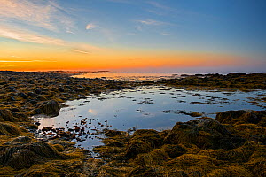 Rockpool and Seaweed covered rocky shore at dawn. Acadia National Park, Maine, USA. October 2013.  -  George  Sanker