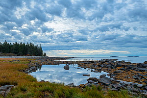 Rocky coastline and Atlantic ocean at dawn, coniferous forest along coast. Acadia National Park, Maine, USA. October 2013.  -  George  Sanker