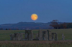 Supermoon rising over Stonehenge, the biggest for 68 years. Wiltshire, England, UK. 13 November 2016. - Peter Lewis