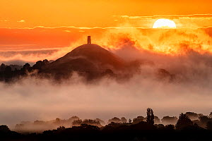 Glastonbury Tor at sunrise surrounded by early morning mist. View from Walton Hill, Somerset, England, UK. June 2019.  -  Guy Edwardes