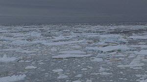 Swell moving disintegrating pack ice, seen from a boat, Antarctica, 2018.  -  Fred  Olivier