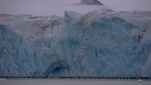 Handheld shot of a glacier terminus, about to calve, with a large flock of Kittiwakes (Rissa tridactyla), Svalbard, 2016.  -  Fred  Olivier