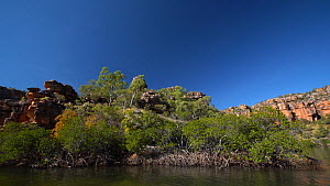 Tracking shot of a mangrove-lined river bank, Ord River, Kimberley, Western Australia, Australia, 2019.  -  Fred  Olivier