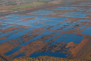 Aerial view of Hatfield Moor National Nature Reserve, rewetted rewilded peatland, managed by Natural England having been used for commercial peat extraction in the past, South Yorkshire, UK. November... - David  Woodfall