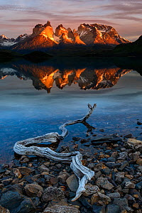 Central Massif and towers of Torres del Paine National Park reflected in Lago Pehoe at sunrise, driftwood on shore in foreground. Patagonia, Chile. November 2018.  -  Nick Garbutt