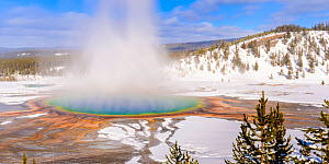 Steam rising from Grand Prismatic thermal pool in snow covered landscape. Midway Geyser Basin, Yellowstone National Park, USA. February 2019. - Nick Garbutt