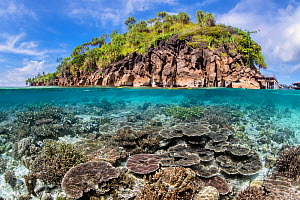 Split level image of a hard coral garden (Acropora spp.) in front of a tropical island. Misool, Raja Ampat, West Papua, Indonesia. Misool Marine Protected Area. Ceram Sea. Tropical West Pacific Ocean. - Alex Mustard