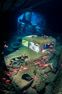 A British World War II Ford (Fordson) WOT3 truck inside the lower level of the hold (hold 2, port side) of the SS Thistlegorm wreck, with Red Sea soldierfish (Myripristis murdjan). Sha'ab Ali, Sin...  -  Alex Mustard