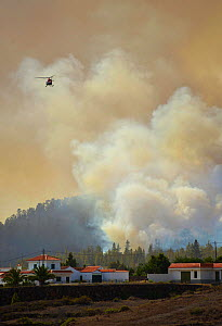 Helicopter in cloud of smoke, fighting fire in Canary Island pine (Pinus canariensis) forest, houses in foreground. Ifonche, Tenerife, Canary Islands, 2012. - Sergio Hanquet