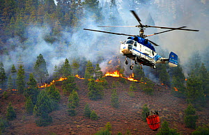 Helicopter fighting fire in Canary Island pine (Pinus canariensis) forest. Ifonche, Tenerife. Canary Islands. - Sergio Hanquet