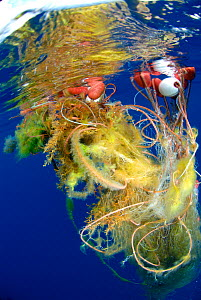Tangled fishing net floating as litter in sea. - Sergio Hanquet
