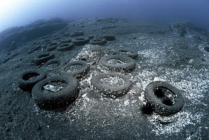 Marine pollution, - rubber car tyres on seabed, Canary Islands. 2014.  -  Sergio Hanquet